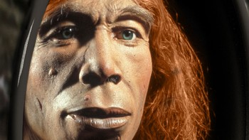 Neandertalere - Illustrasjonsbilde av en neadertalermann publisert i magasinet Science. - Foto: Michael Hofreiter and Kurt Fiusterweier / Scanpix/AFP