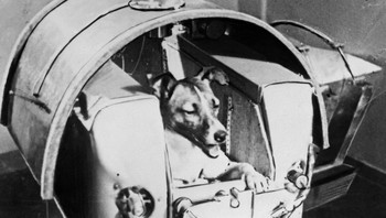 Laika 3. november 1957. - Foto: OFF / AFP