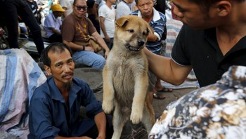 CHINA-DOG MEAT/ A customer holds a puppy for viewing at Dashichang dog market ahead of a local dog meat festival in Yulin