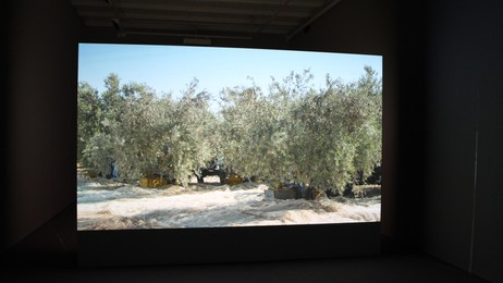 Sigalit Landau: videoen 'Four Etered the Grove' fra 'Olives' (2012). (Foto: Nina Skurtveit/NRK)