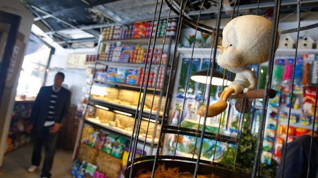 Tweety i dyrebutikk (Foto: Mario Tama/Getty Images/Scanpix/AFP)
