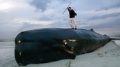 Moby Dick (Foto: MICHAEL KOOREN/REUTERS)