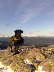 Hund p&#xE5; fjelltur (Foto: Martin Thoresen)