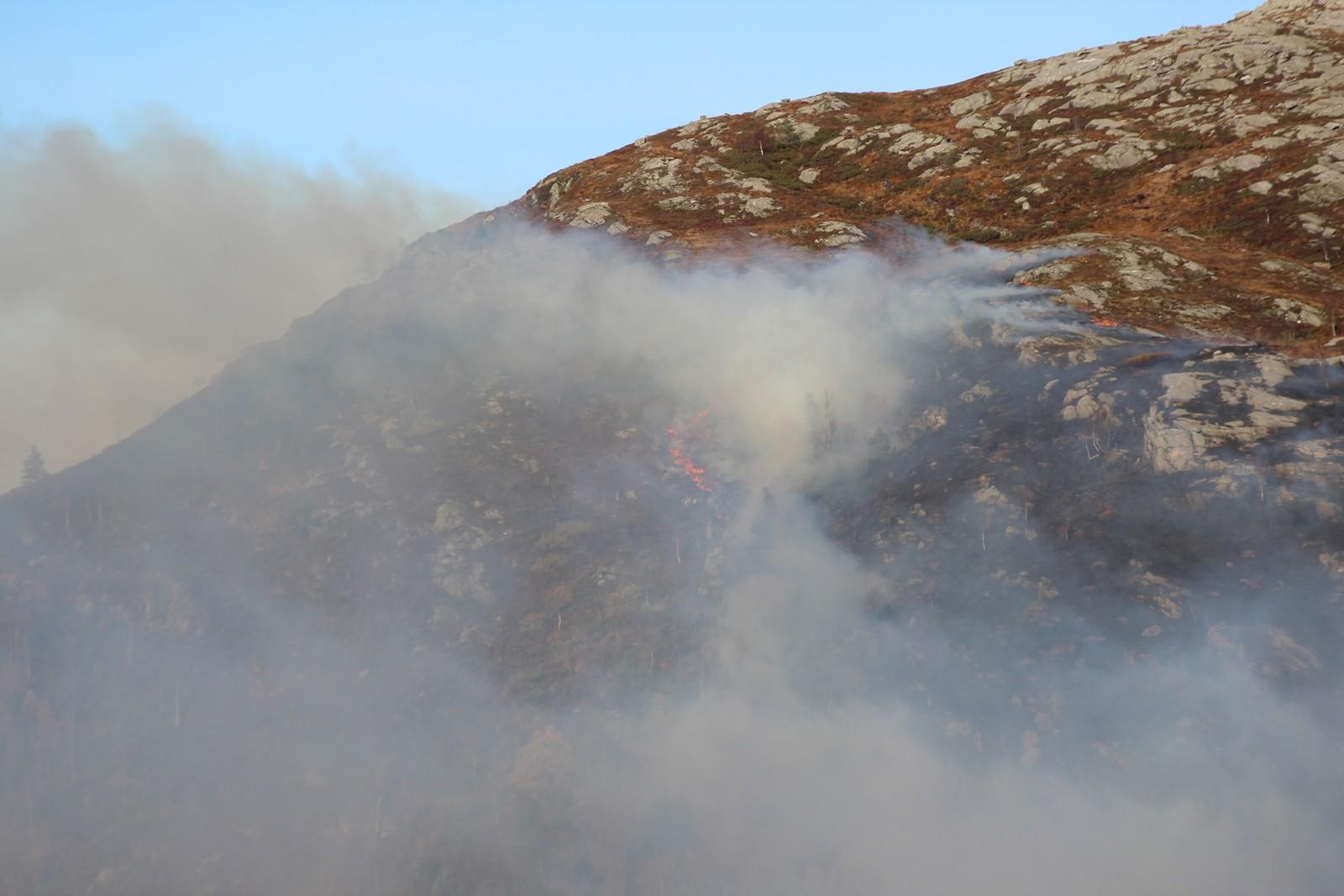 Lyngen brenn i fjellområdet i Lavikdalen.