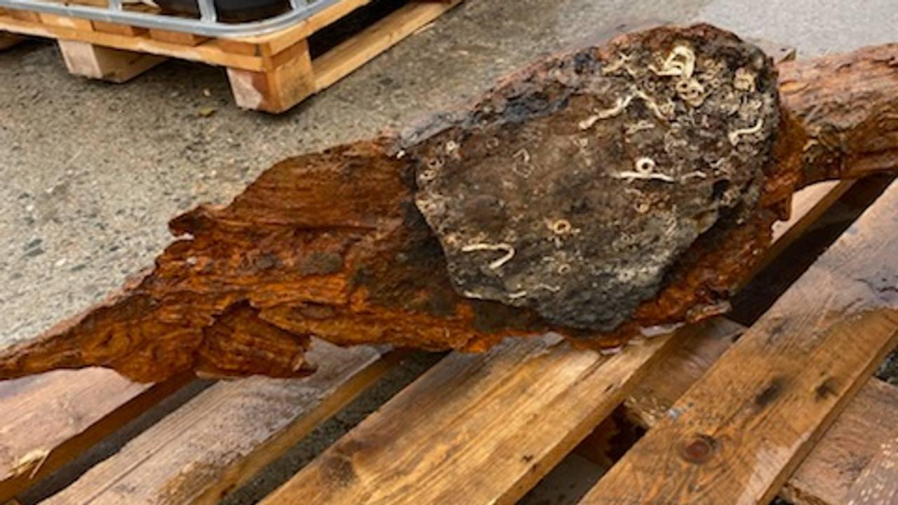 Sjeldent anker funnet ved Bjørnøya
