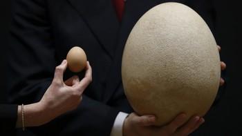 Eit svært sjeldant og intakt fossil-egg skal under hammaren i London. Egget kjem frå den største fuglen som har spankulert på jorda - den no utrydda elefantfuglen.