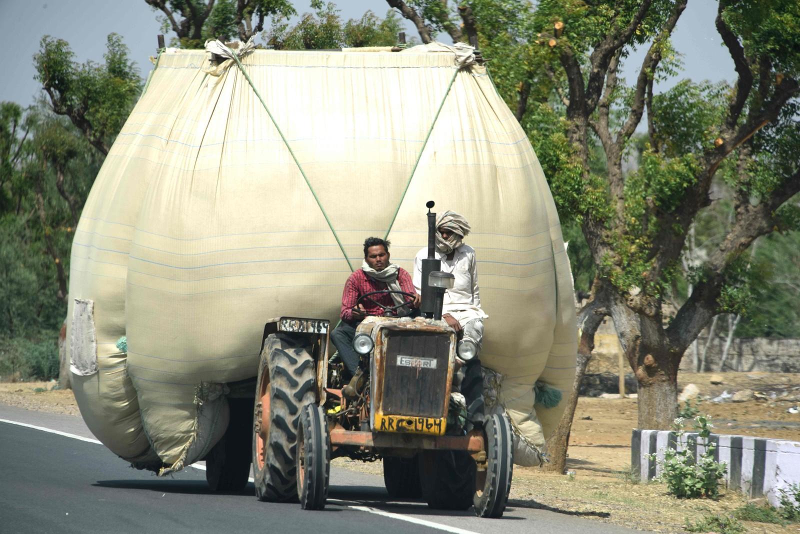 Bred last! To indiske bønder frakter korn i Rajasthan.
