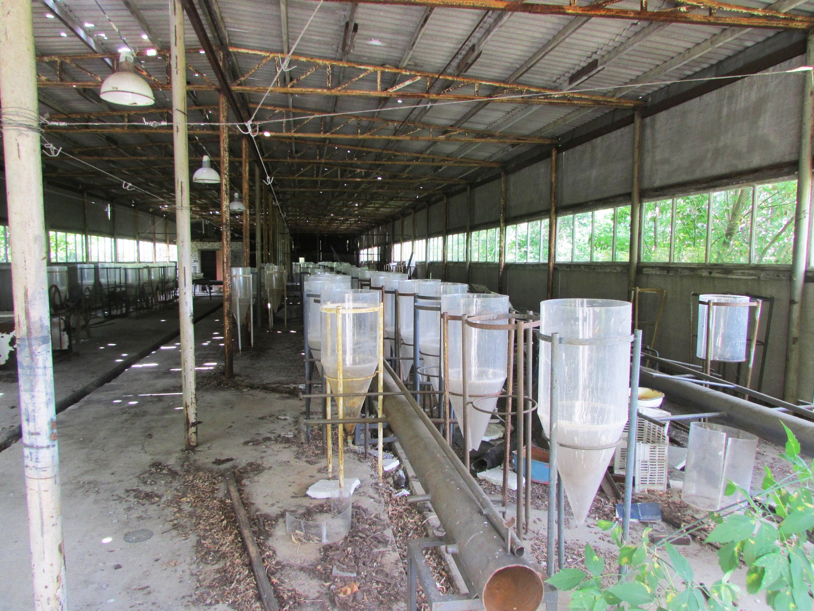 Etter ulykken i 1986 ble det opprettet en forskningsinstitusjon bare et par kilometer fra den ødelagte reaktoren for å undersøke konsekvensene for dyr og fisk.
