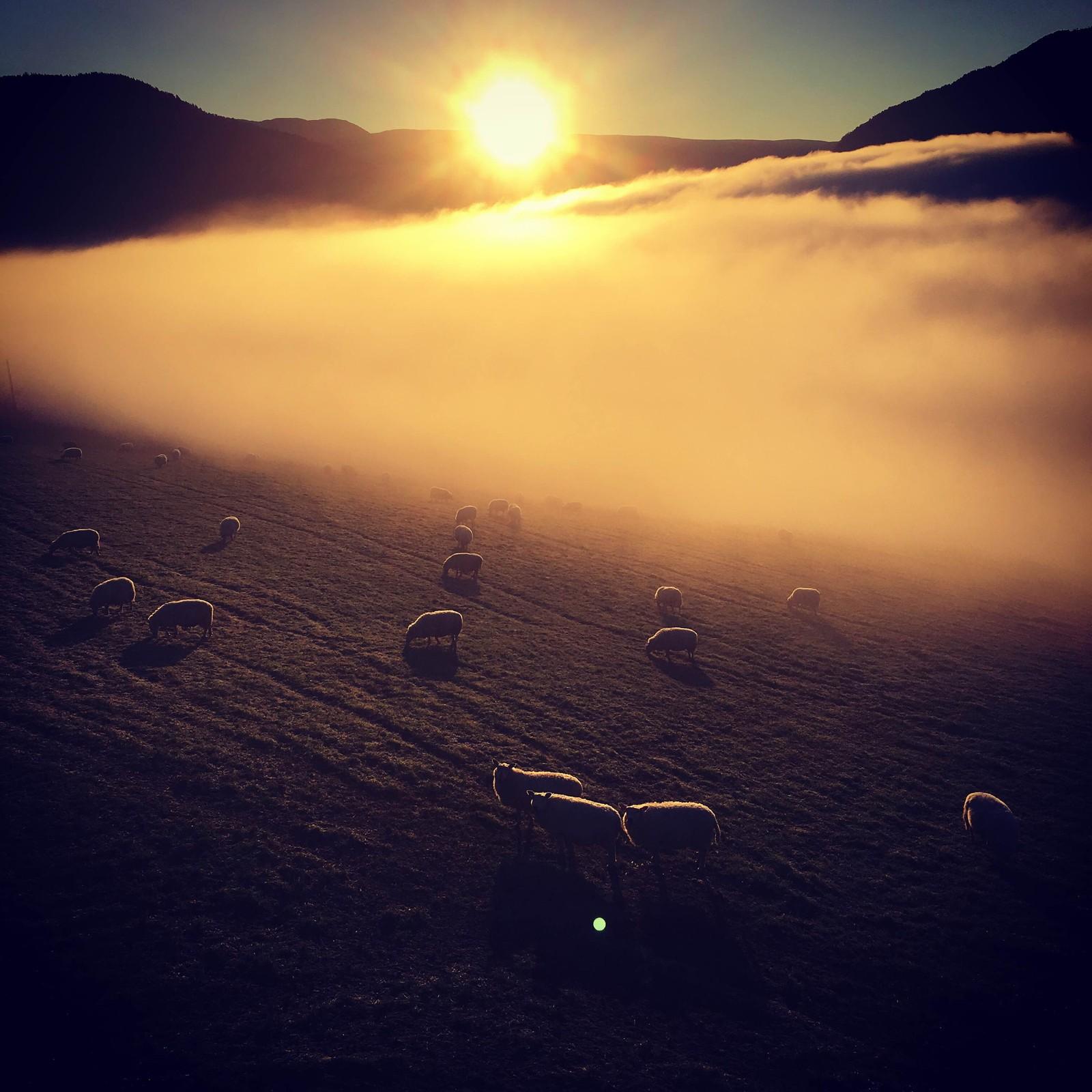 Sauer i soloppgang på Alme.