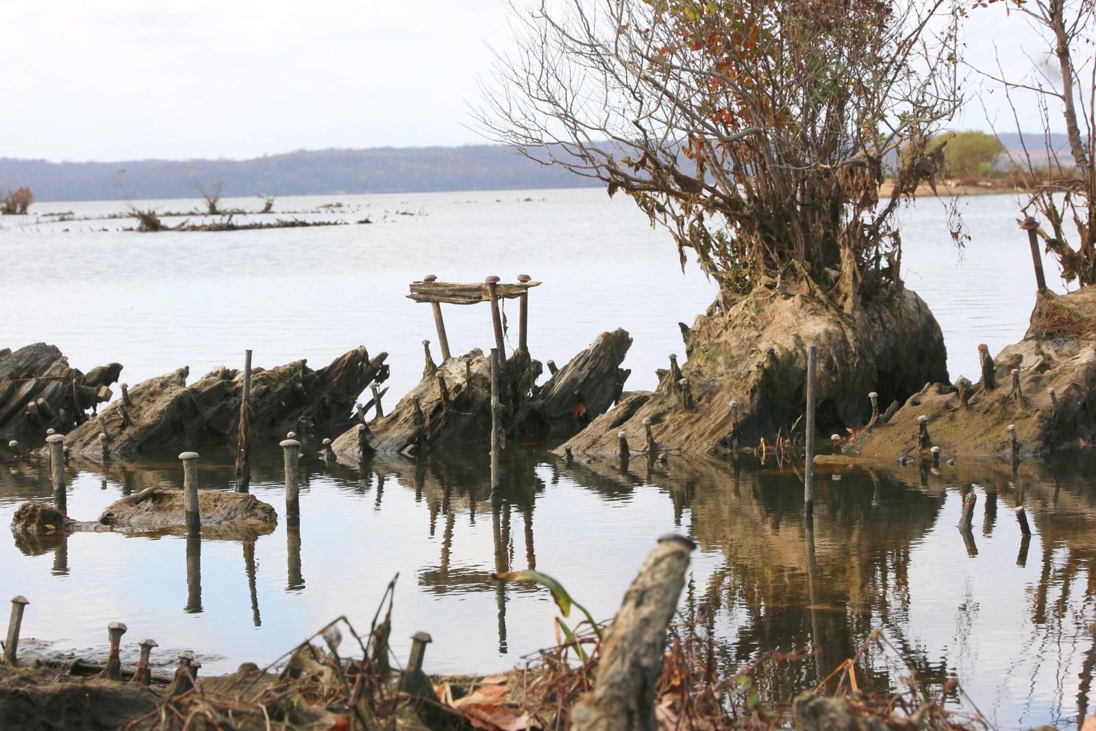 Planteliv inntar skipsvrak i Mallows Bay.