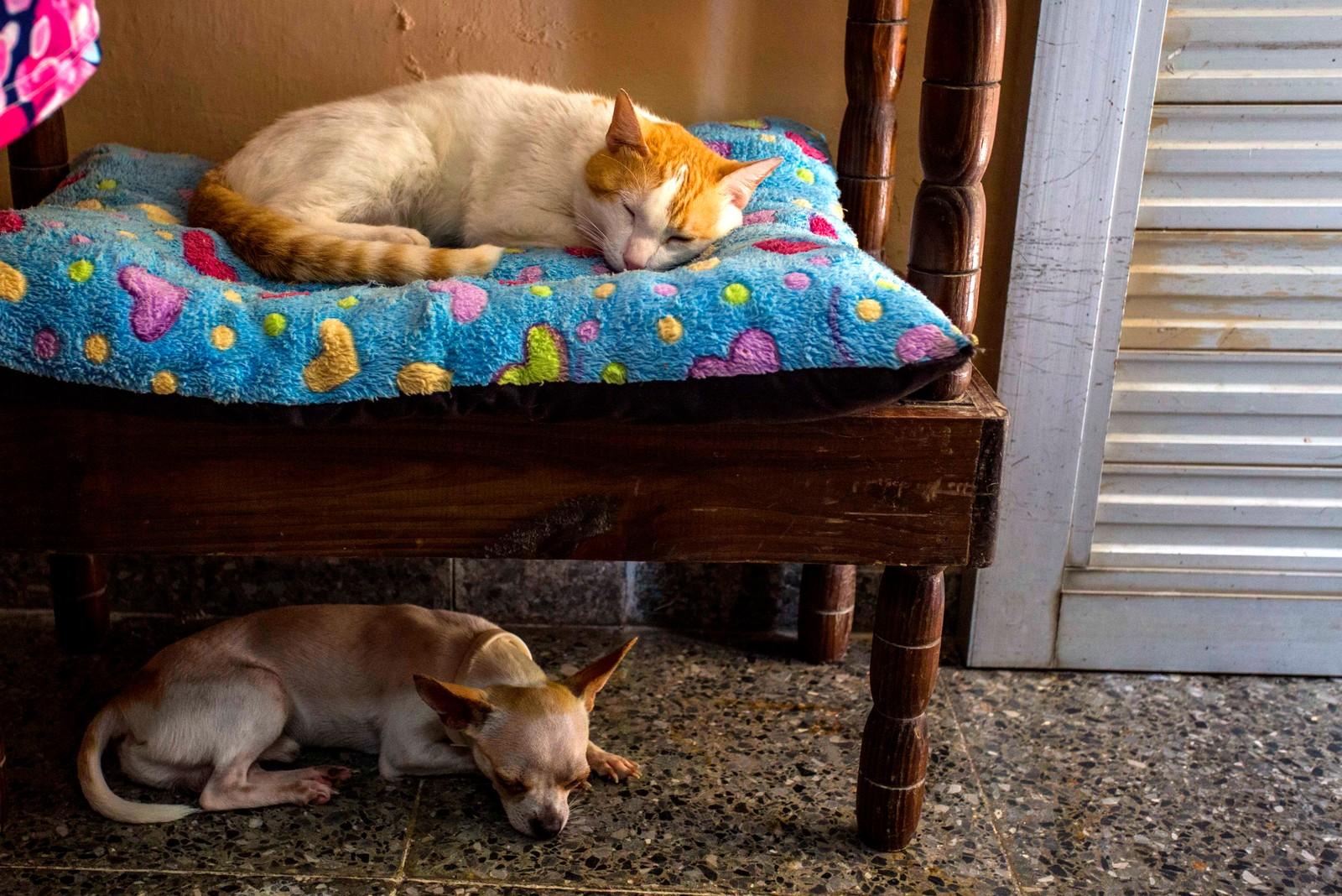 Et bilde for både hundeelskere og katteelskere. Dette bildet er fra et kjeledyrhotell i Havanna på Cuba. I de siste årene har det kommer dusinvis av lignende steder og salonger for hunder. Det er blitt skapt flere hundre jobber, og flere små påminnelser om de økende forskjellene mellom rike og fattige på øya, som for mange er forbundet med likhet og solidaritet.