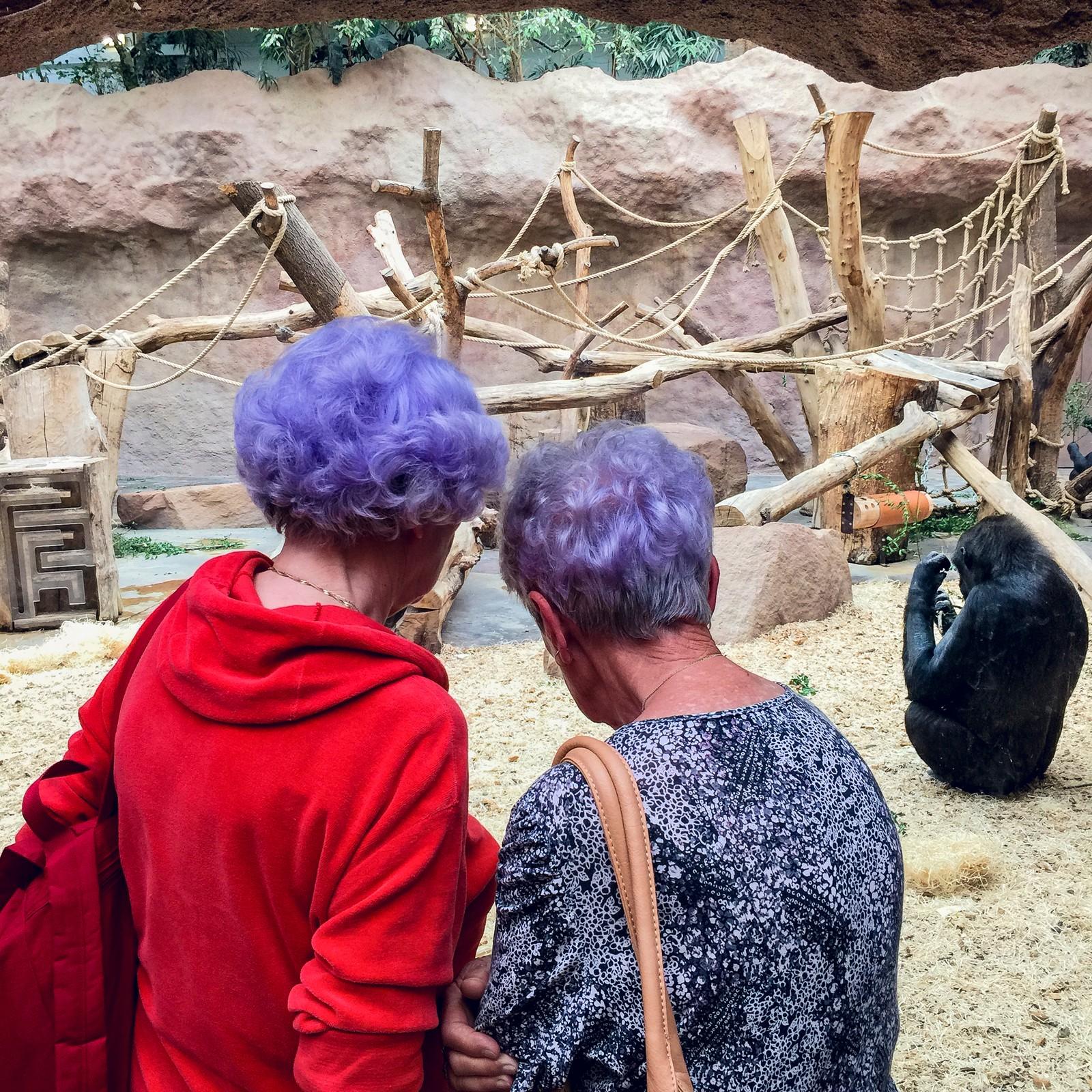 3. pris åpen klasse: To venninner betrakter en uinteressert gorilla i Praha Zoo. Juryens begrunnelse: Et fantastisk øyeblikk, humoristisk og morsomt. Det visuelle pustehullet vi trenger i hverdagen.