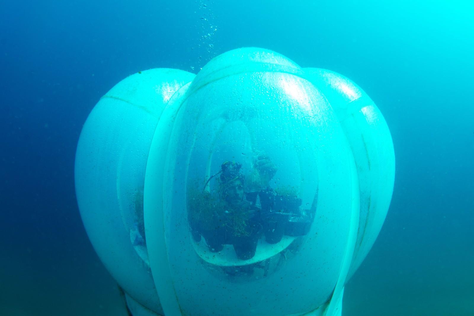 Undervannsprosjektet Nemos Hage i Italia består av diverse planter og hvordan de klarer seg åtte meter under havoverflaten.