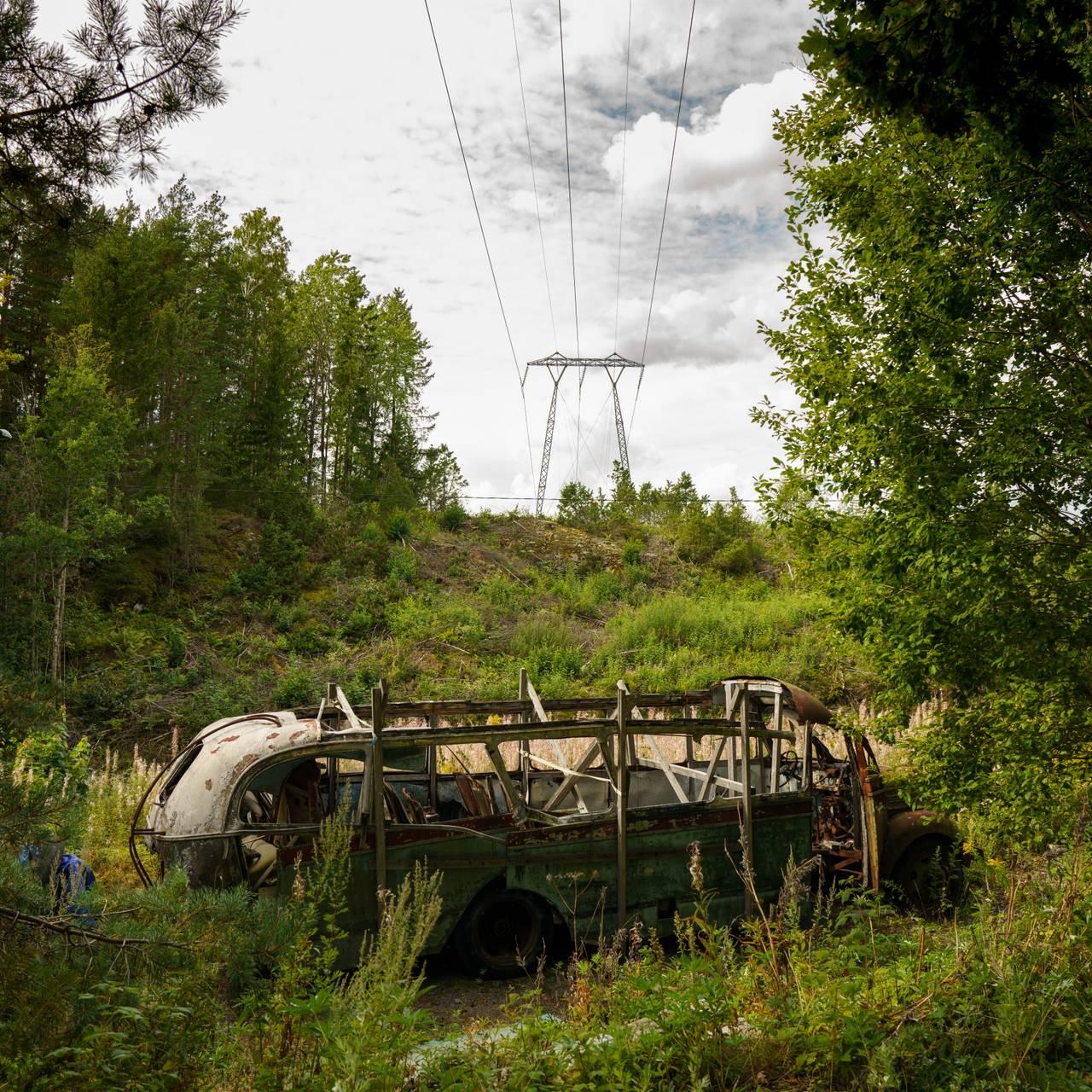 Bussvrak i skogen