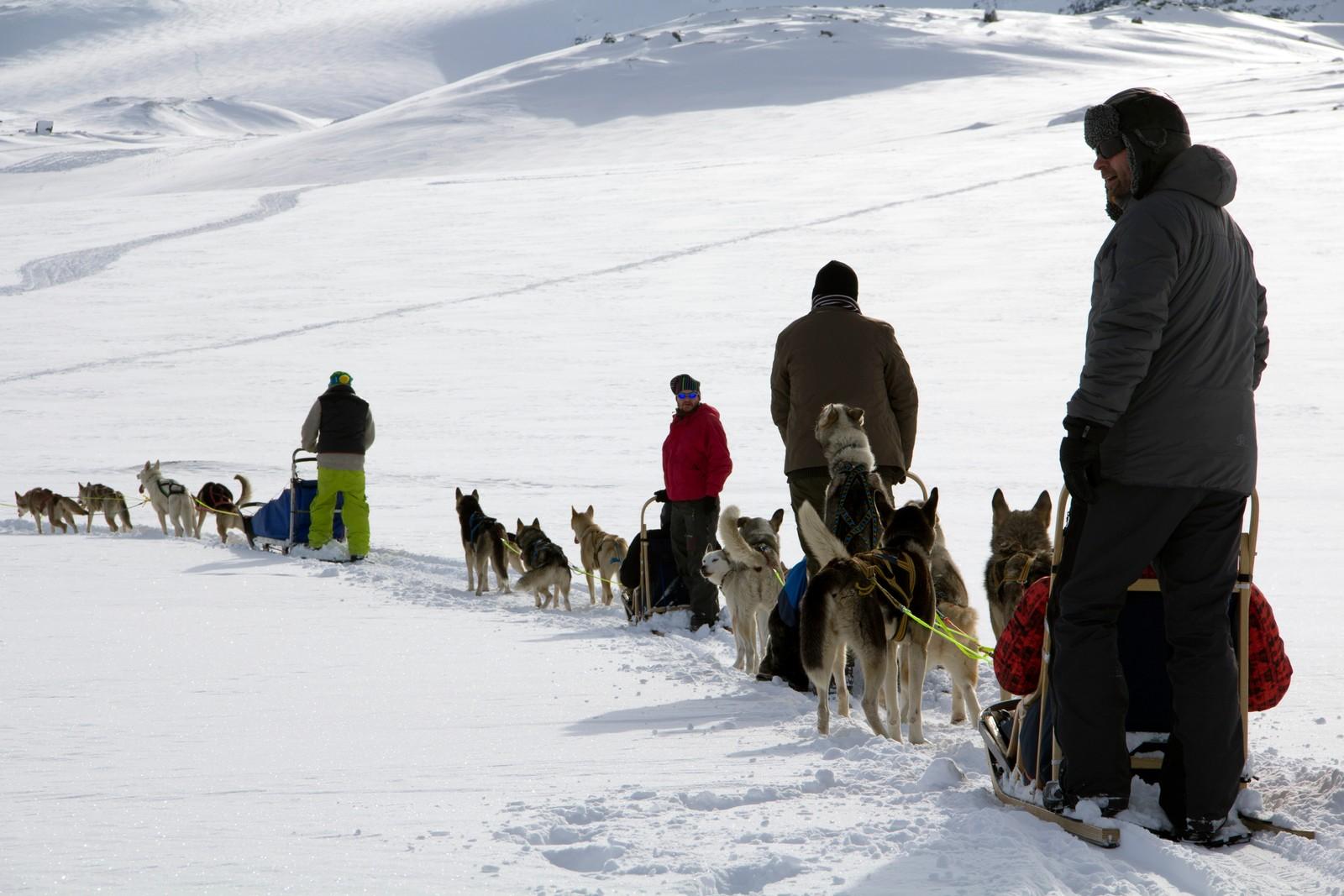 Neste post på programmet: Hundekjøring.