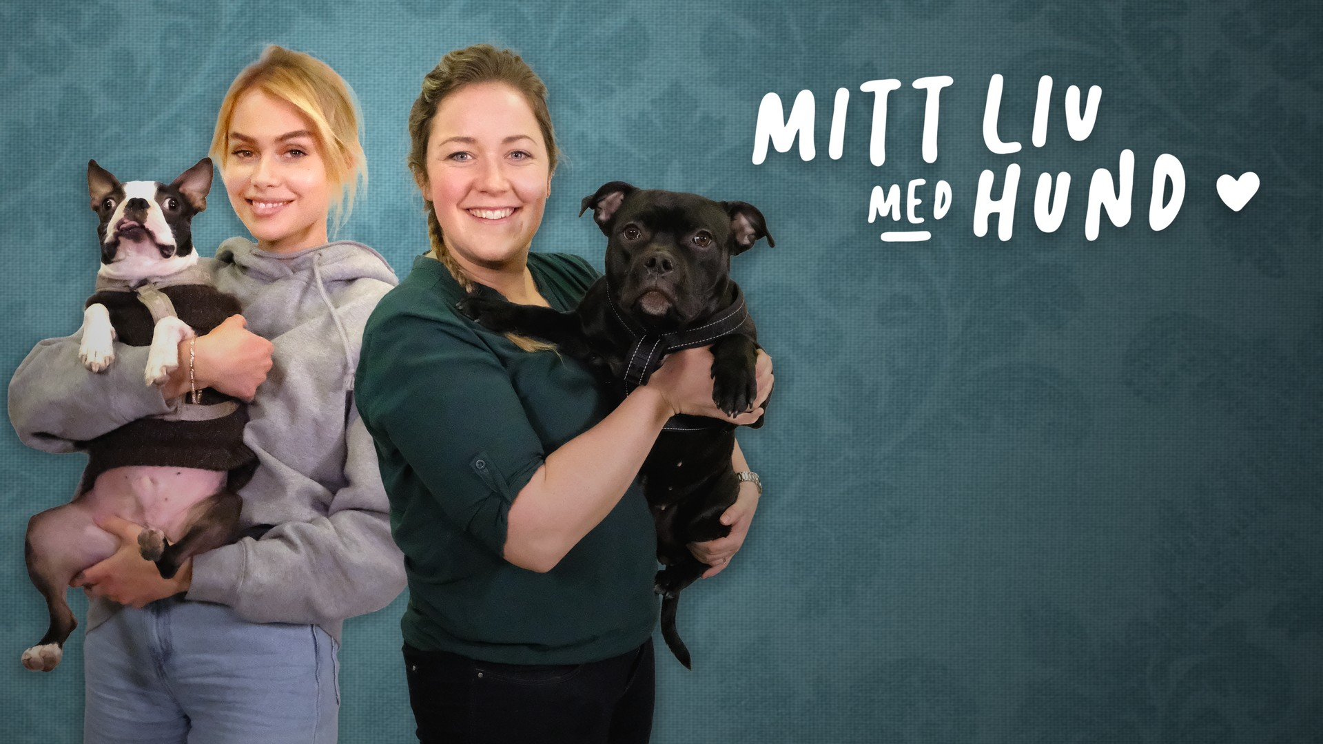 Mitt Liv Med Hund