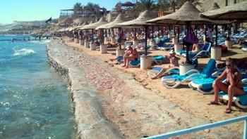 Angrepet av hai i Egypt