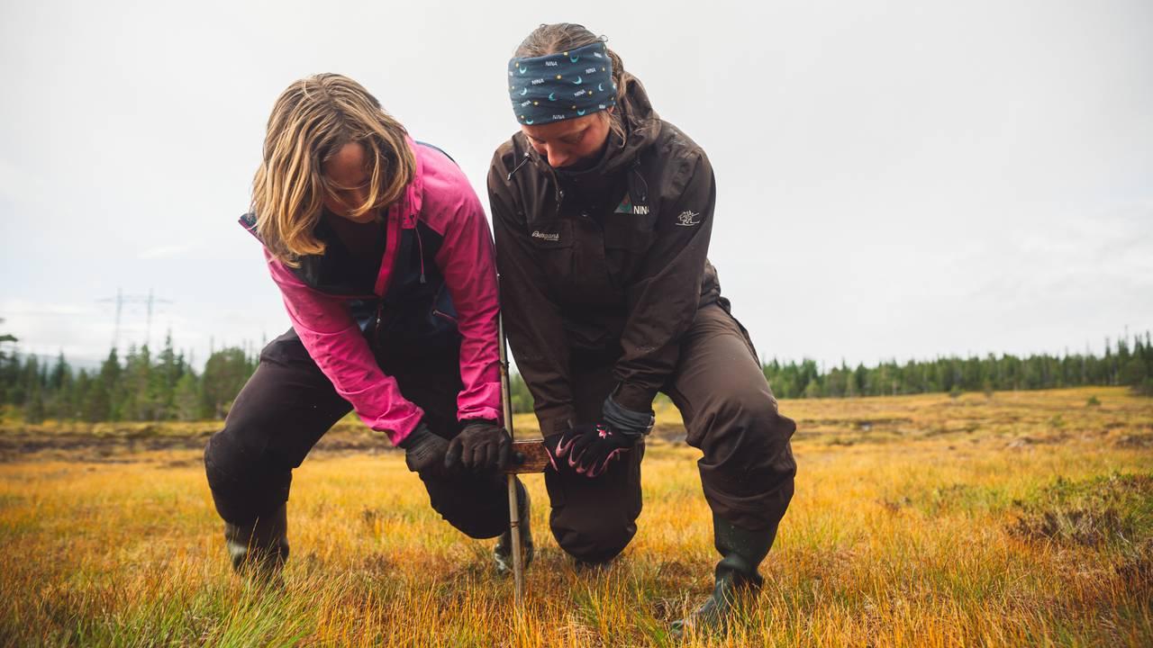 Marte Fandrem og Magni Olsen Kyrkjeeide lener seg med egen kroppsvekt på hver sin side av håndtaket som er festet på stangen som er dyttet ned i myra.