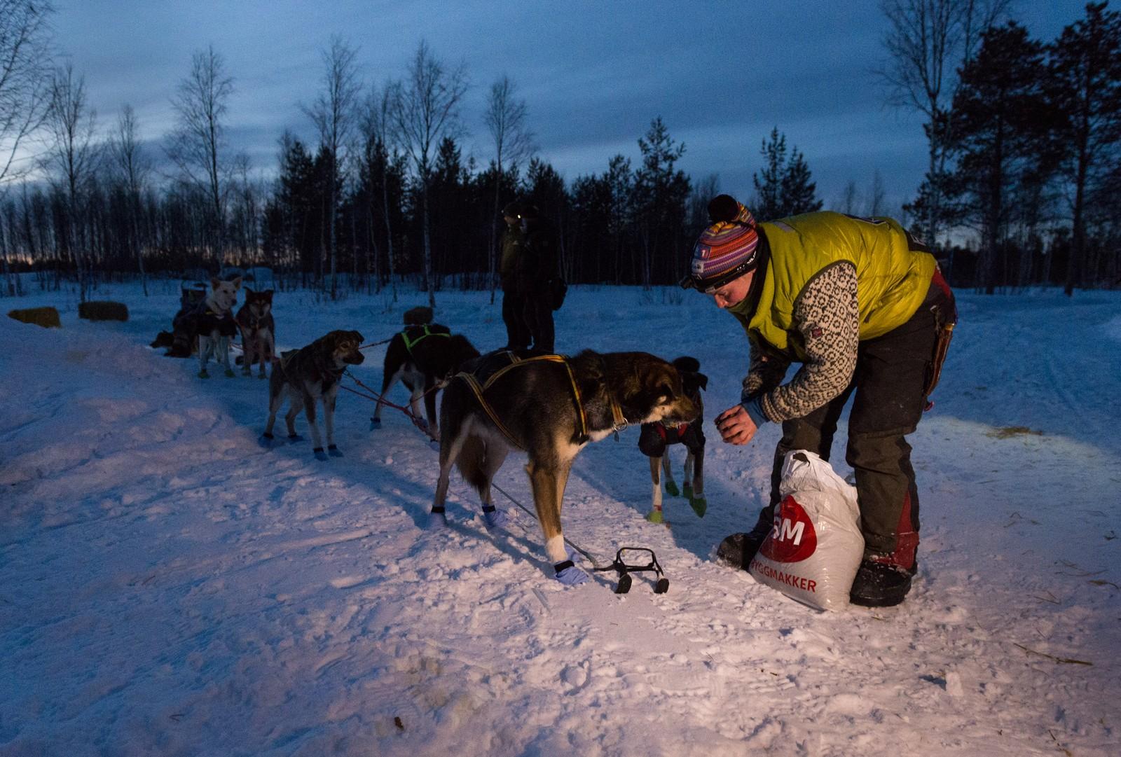 Sigrid Ekran forer hundene.