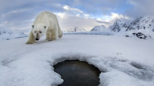 The Lost Polar Bear Selfie