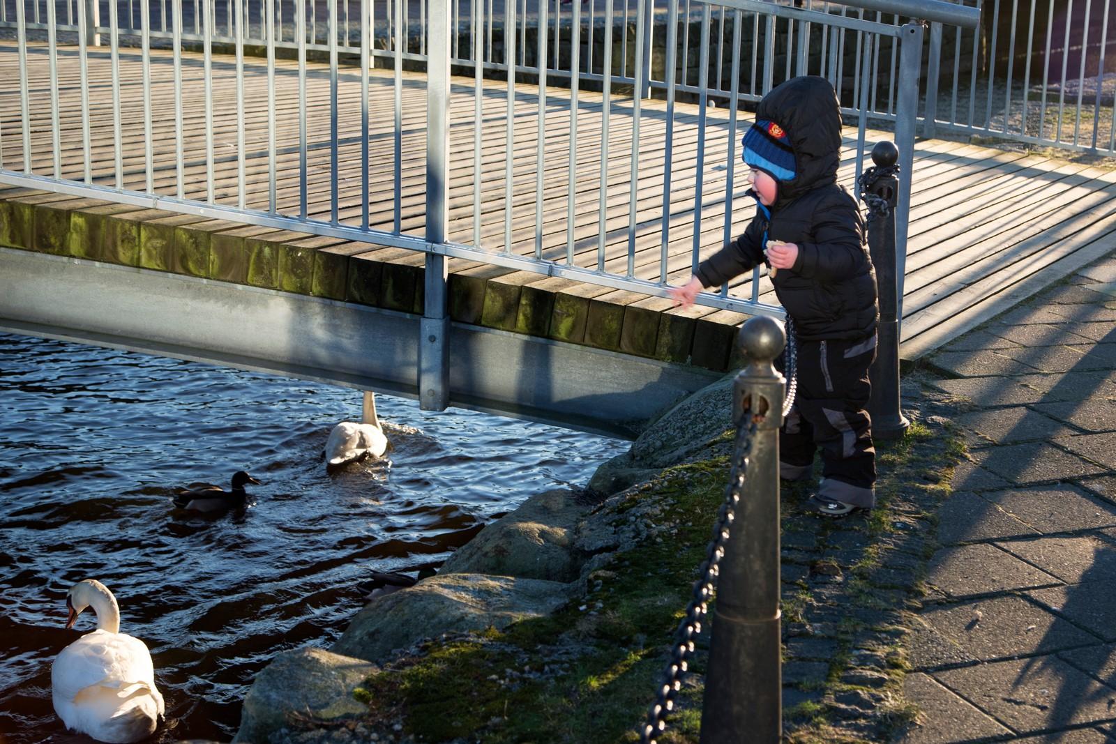 Noen benyttet søndsagsturen til å mate fuglene i Hafrsfjord