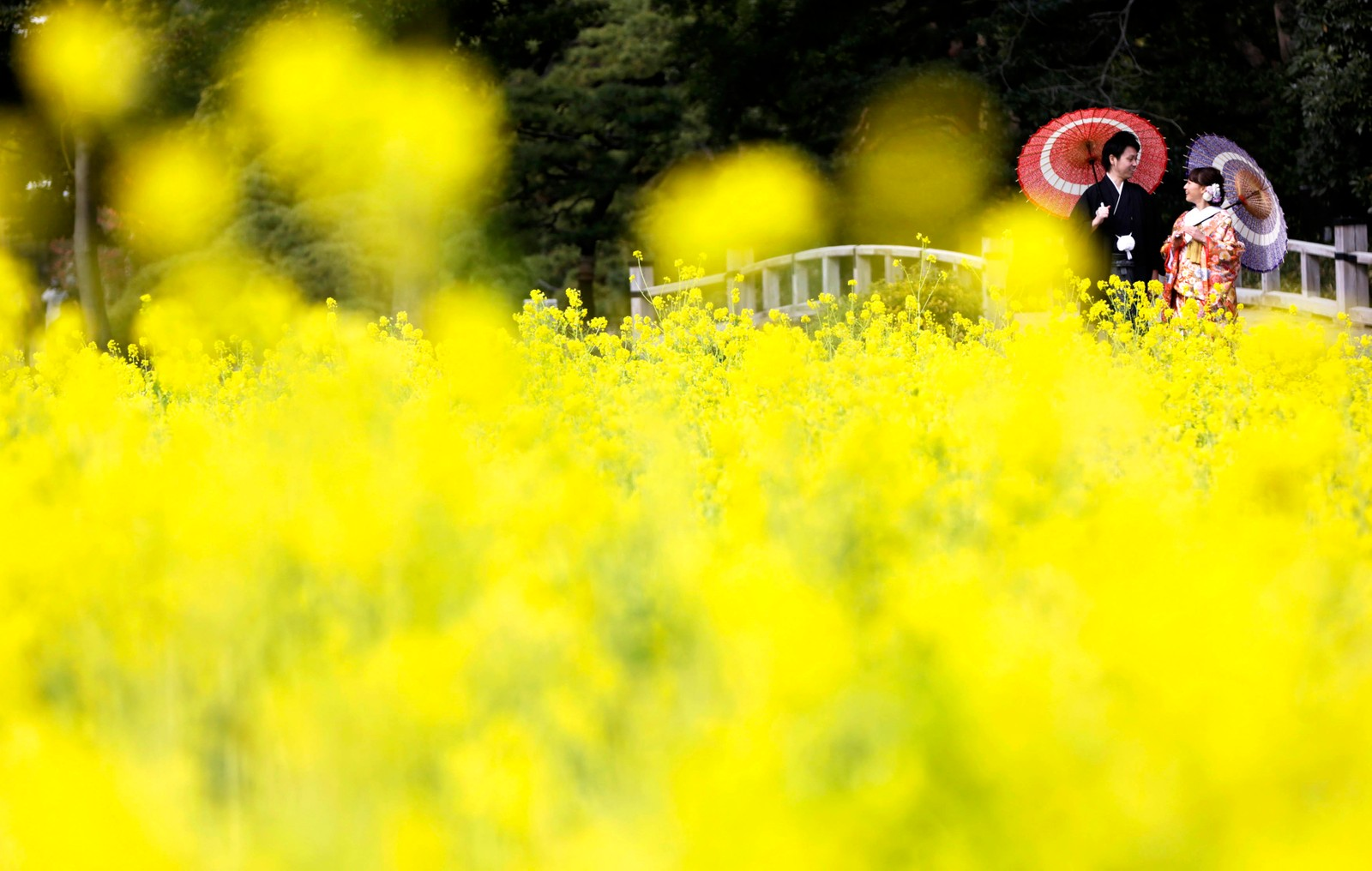Et japansk par får brudebildene tatt i Hamarikyu-hagen i Tokyo.