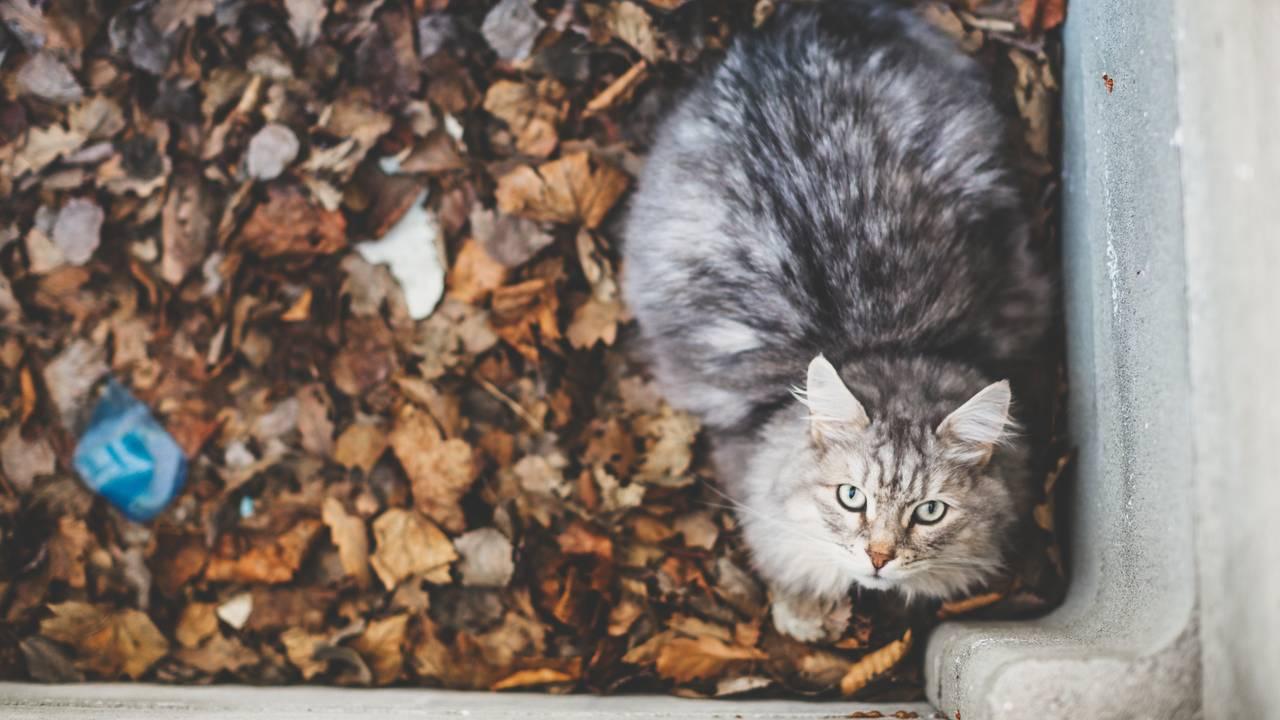 Katt stirrer opp i kamera
