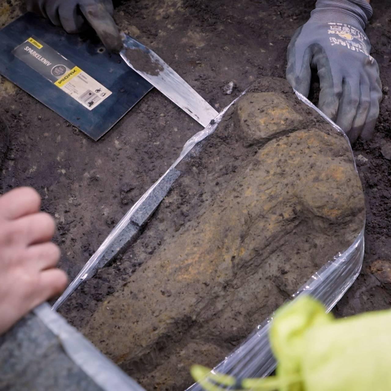 Beinrester av et dyr funnet i gravkammeret i Gjellestadskipet