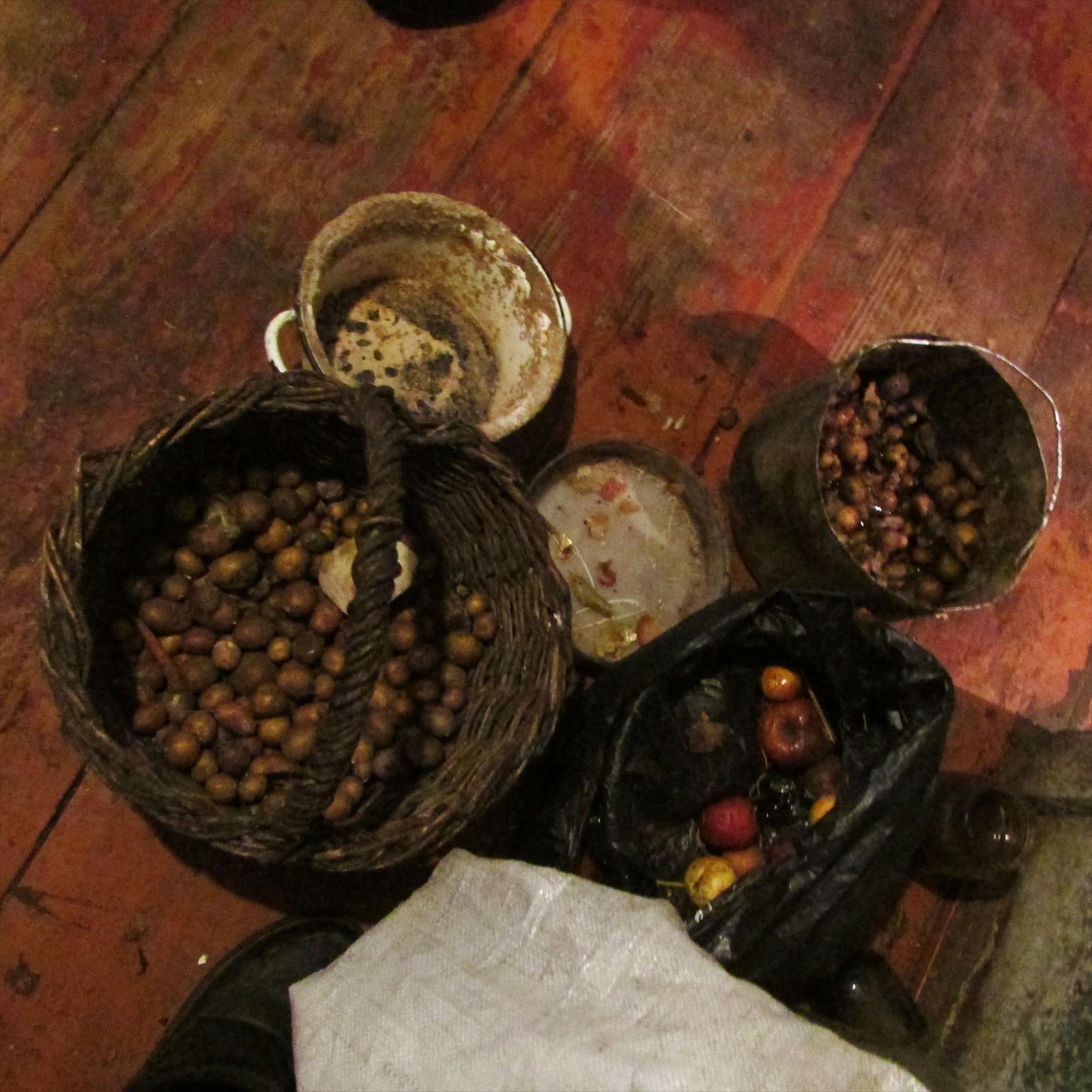 Selvplukkede rotfrukter er en av basisene i husholdningen til Maria og Ivan.