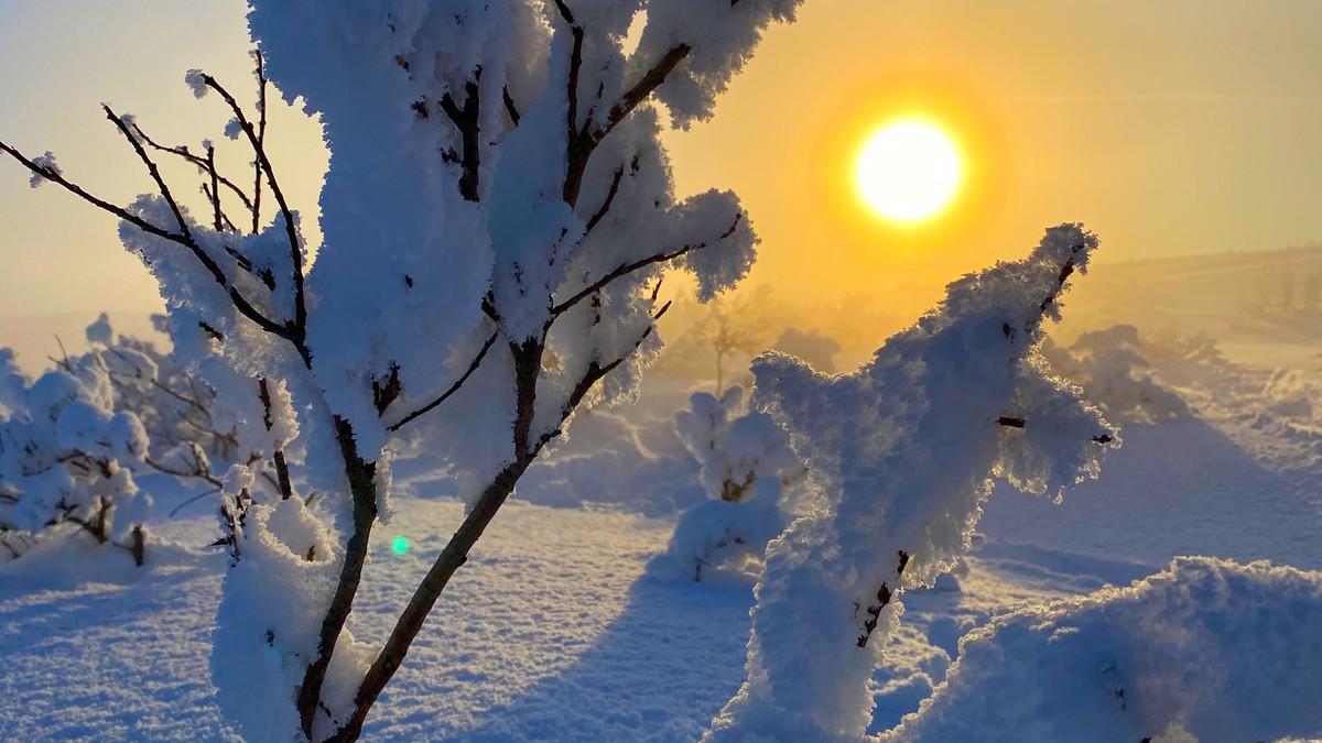 Bilde av en kvist tildekt med snø, sola skinner i bakgrunnen.