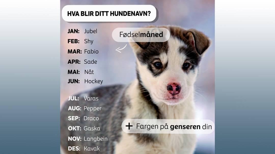Ung hund med blurry bakgrunn. Tekst: Hva blir ditt hundenavn. Kombinér måneden du er født med fargen på genseren din.