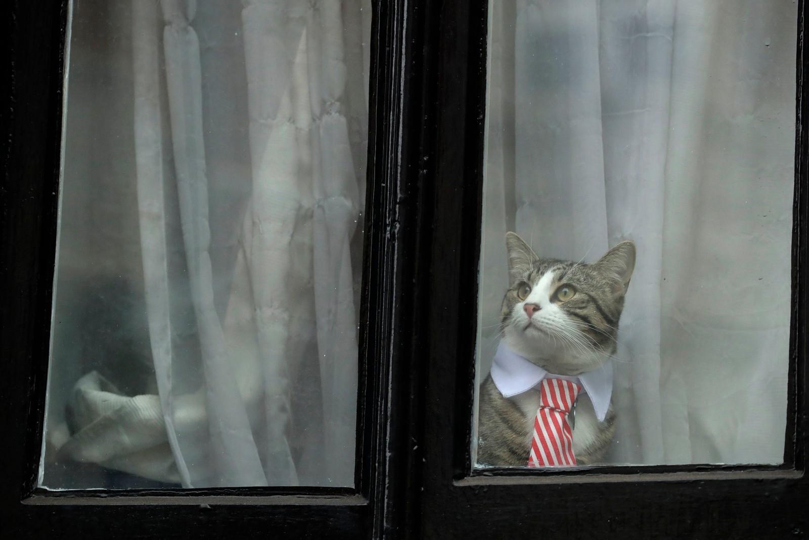 En katt i finstasen ser ut av et av vinduene til ambassaden til Ecuador i London. Kanskje han ventet på den svenske statsadvokaten Ingrid Isgren som skulle avhøre Wikileaks-grunnleggeren Julian Assange.