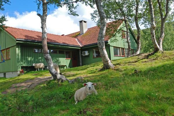 Sommerlig idyll ved hytten. -  Foto: Torill Refsdal Aase