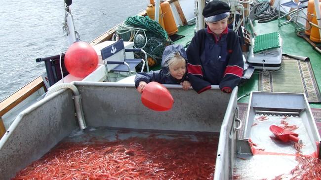 """Rekefiske var noko fiskarar frå Furenes i Gulen spesialiserte seg på. Her studerer Morten Stian og Silje Rasch fangsten om bord i båten til bestefar Svein Kvamme, """"Gulaskjer"""". Foto: Elin Rasch."""