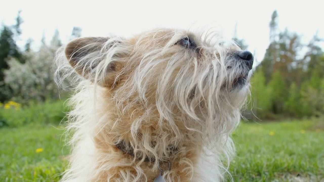 Hunden til Frederica Miller
