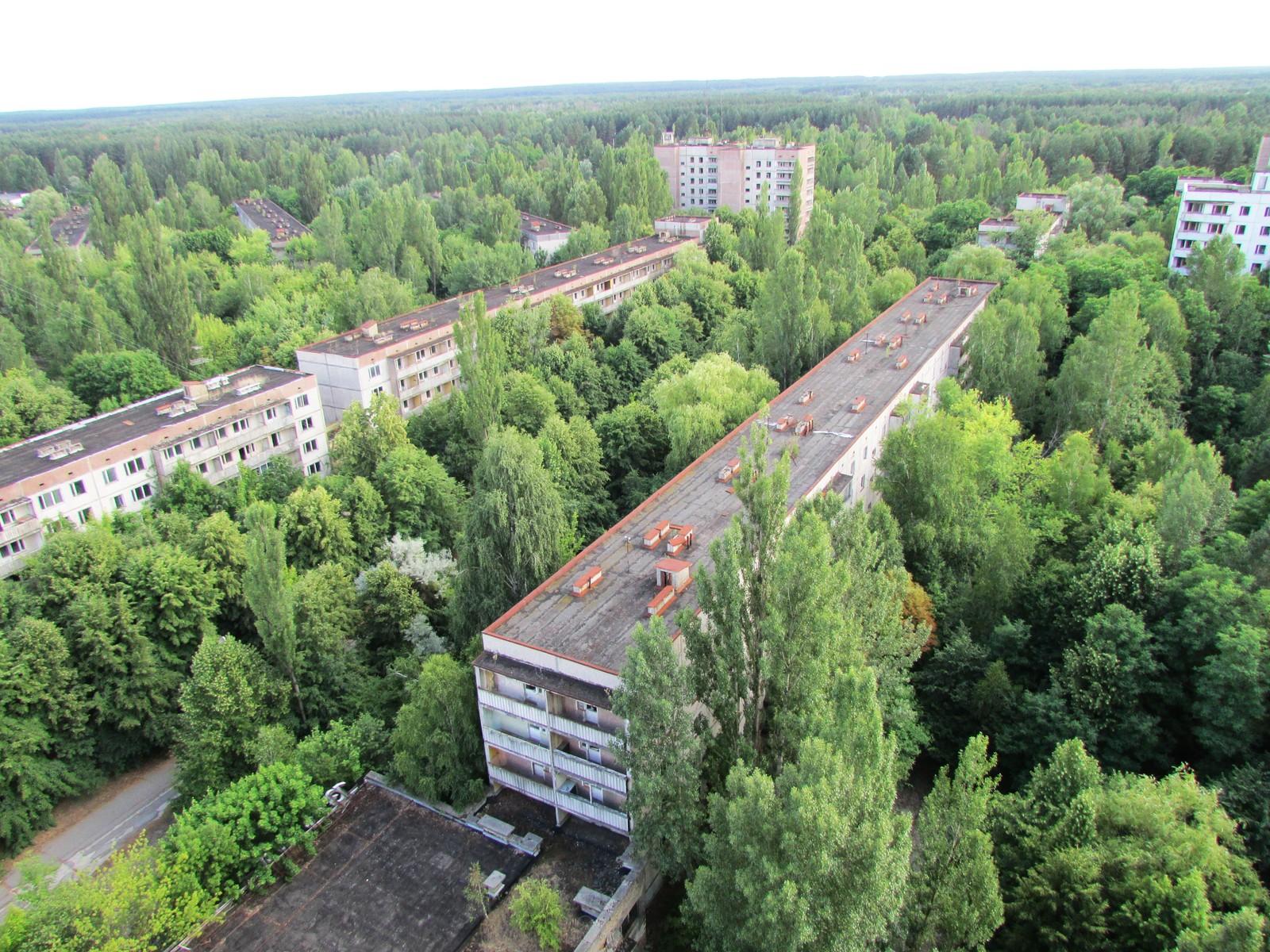I de 30 årene som har gått siden katastrofen har bjerketrærne vokst seg høyere enn de fem etasjers blokkene i Pripyat.