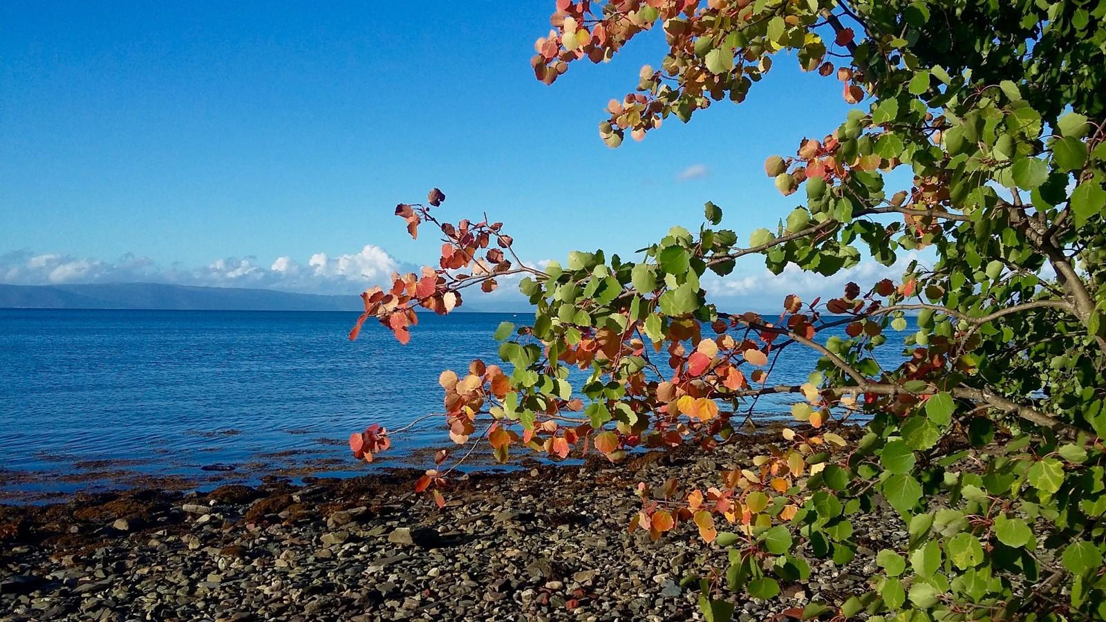 Høst ved sjøen