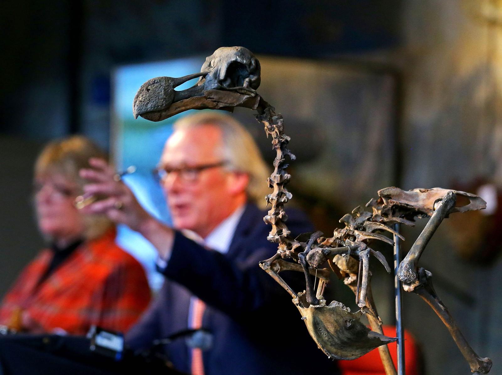 Auksjonarius James Rylands selger et nesten komplett dodo-skjelett til en privat samler i Billinghurst i England. Prisen ble nesten 3,7 millioner kroner. Dodo, eller dronte som den også kalles, var en fugl på rundt 20 kilo som ikke kunne fly. Man antar at den døde ut i rundt 1681.