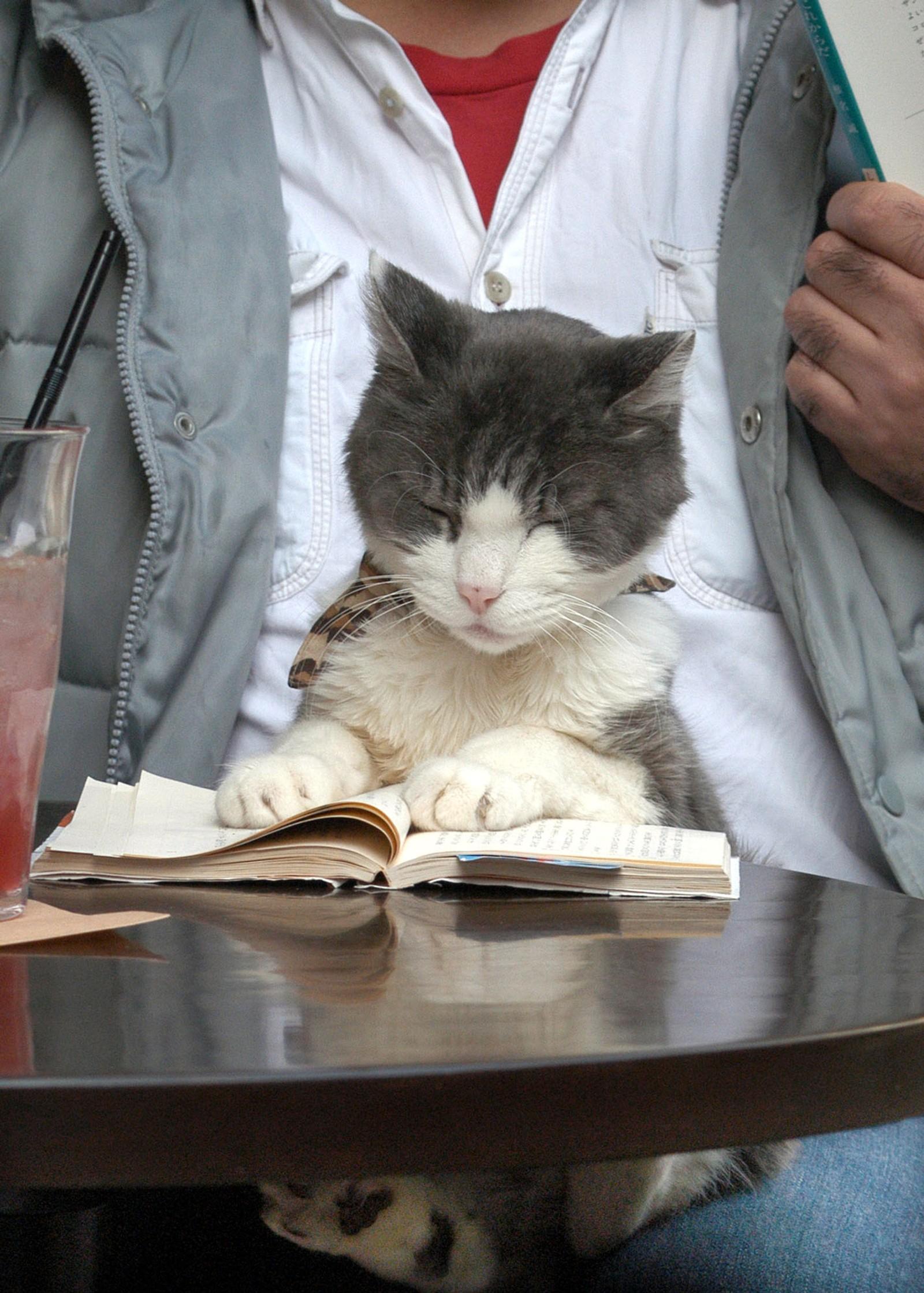Den første kattekafeen i verden åpnet i Taipei, Taiwan i 1998.