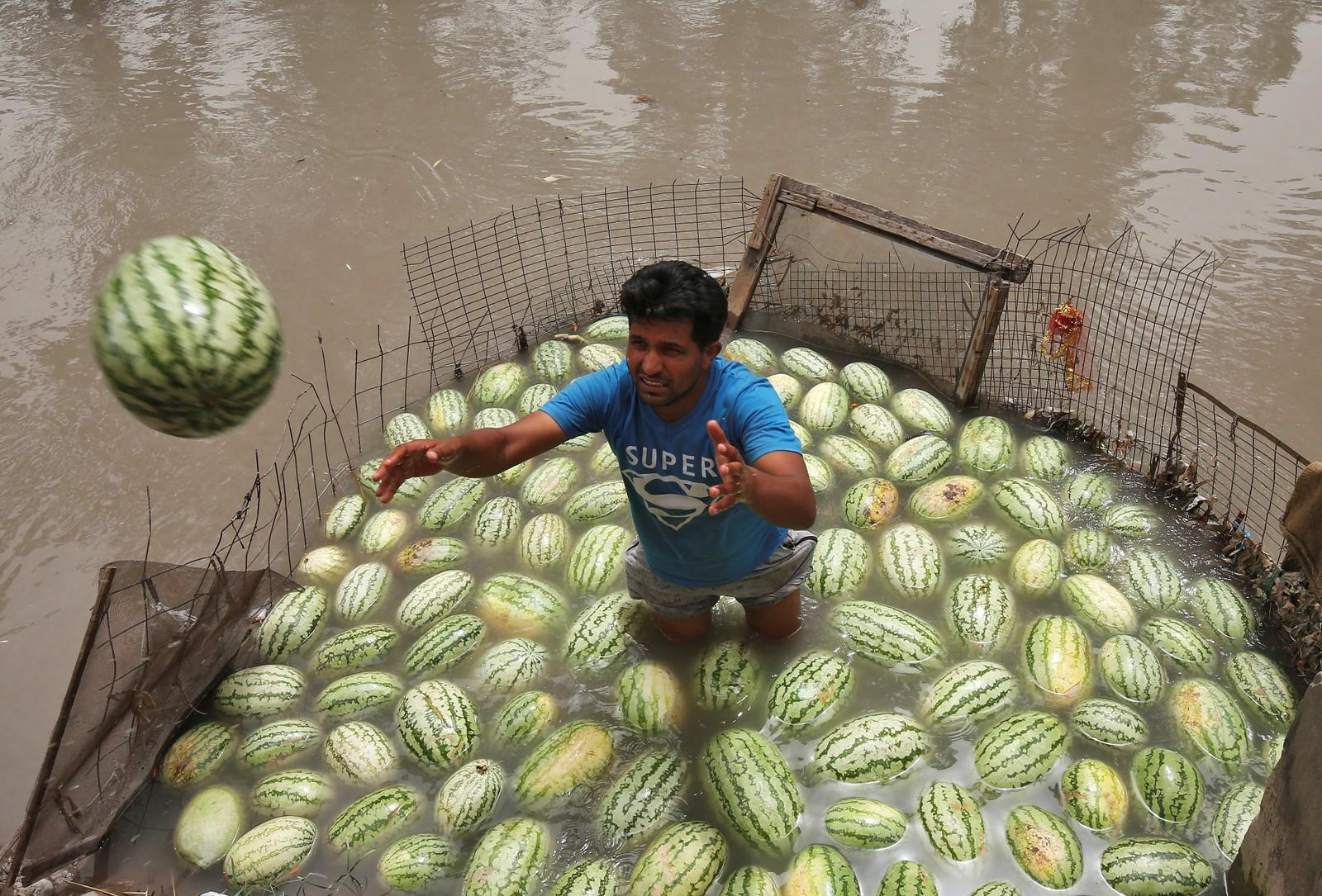Vannmelon i vann en het sommerdag i Jammu, India.