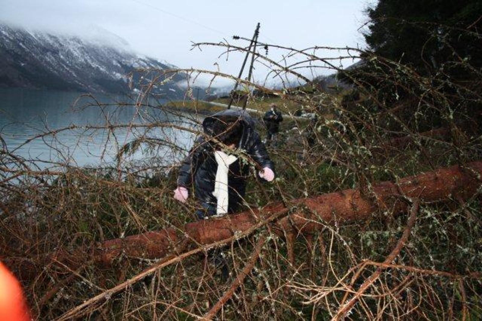 Familien til Berit Myren måtte klatre over tallause tre då dei skulle ta seg opp til Helset i Lodalen andre juledag.