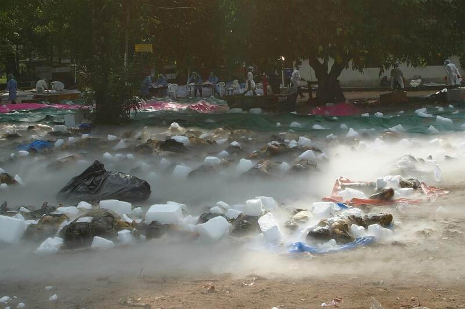 Torleiv Rognums egne bilder fra tempelplassen i Bang Muang i Thailand hvor de omkomne etter tsunamien ble undersøkt.