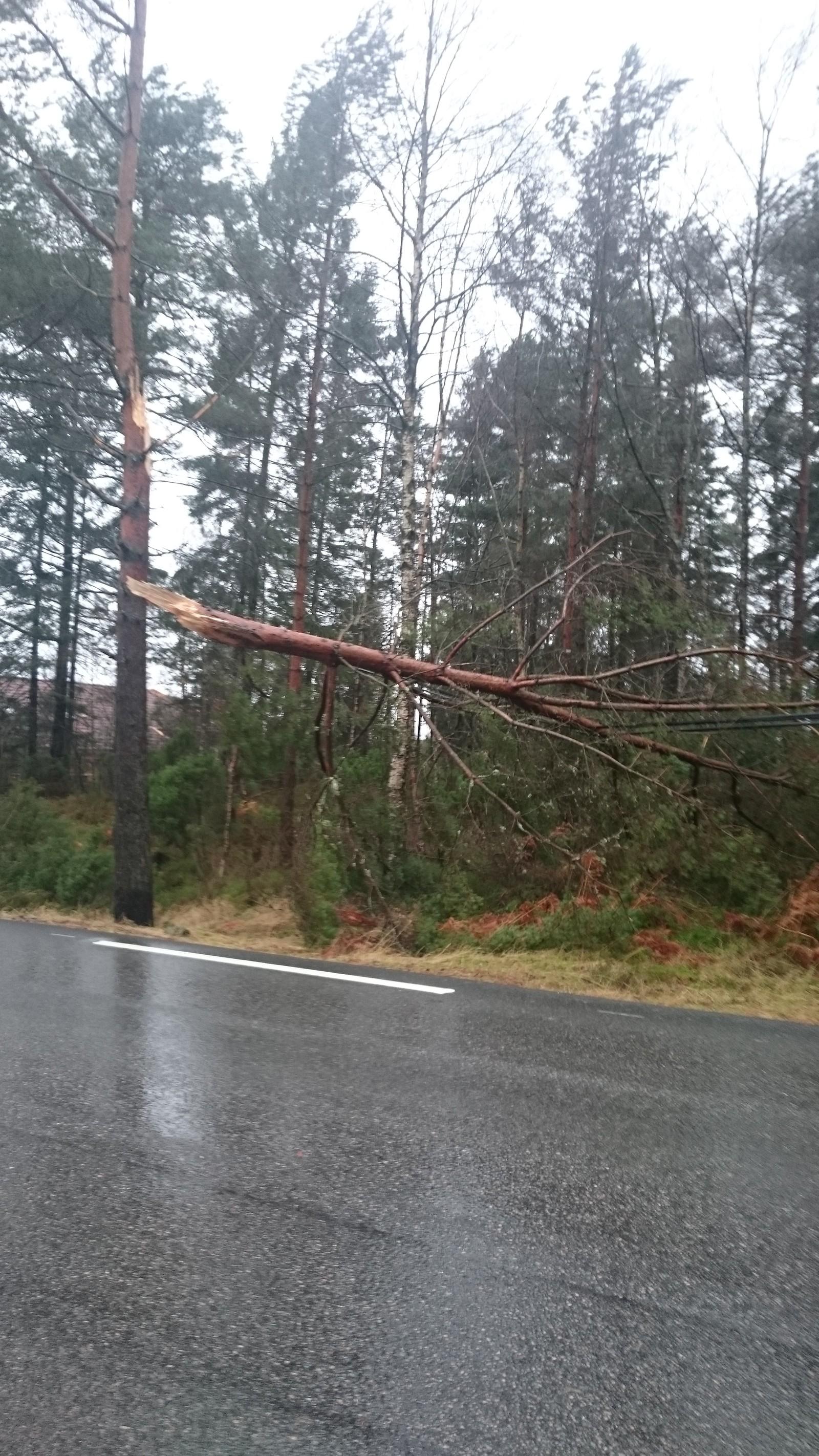 KNEKK: Sterke krefter var i sving i skogen ved Osøyro tidlig fredag ettermiddag.