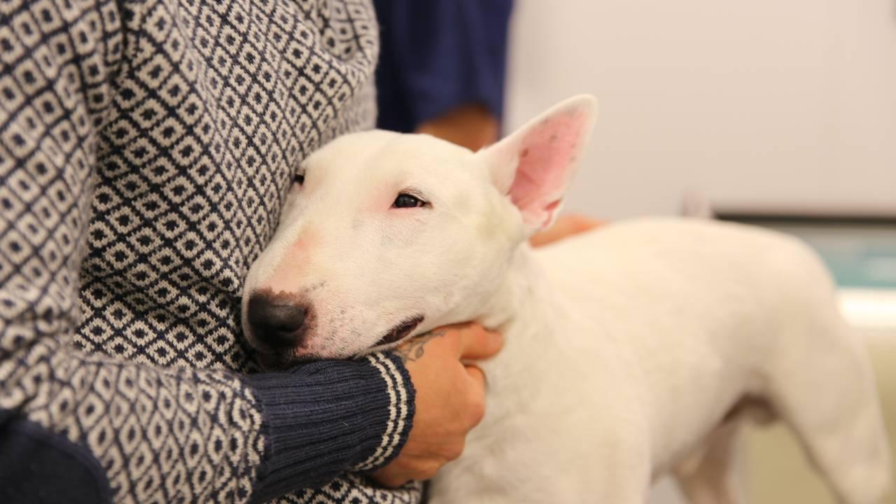 Hunden Milo med eigar Marius Dybevåg.