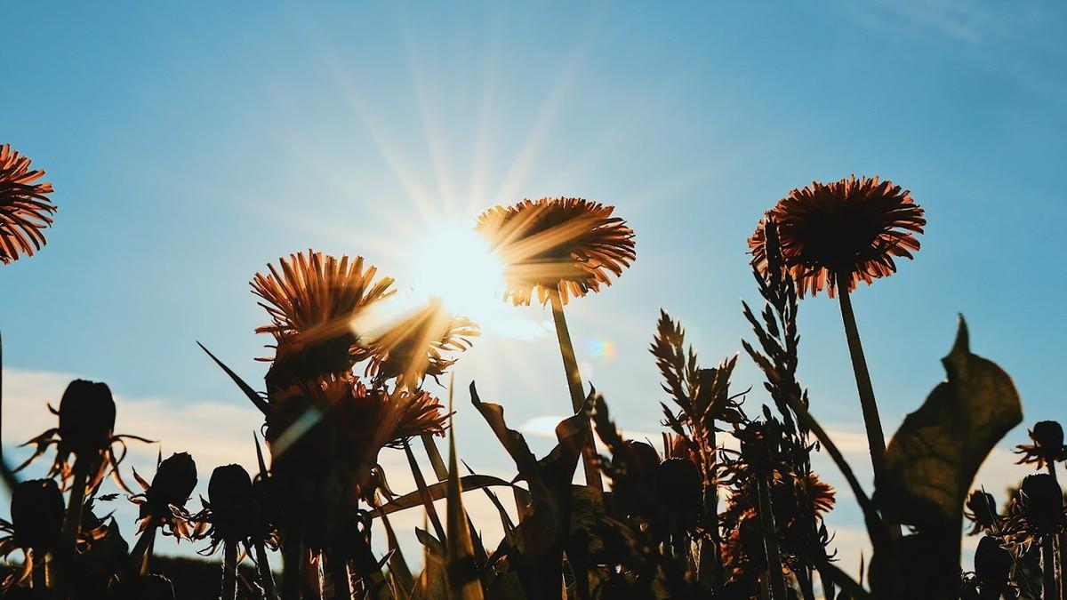 Blomster og sol