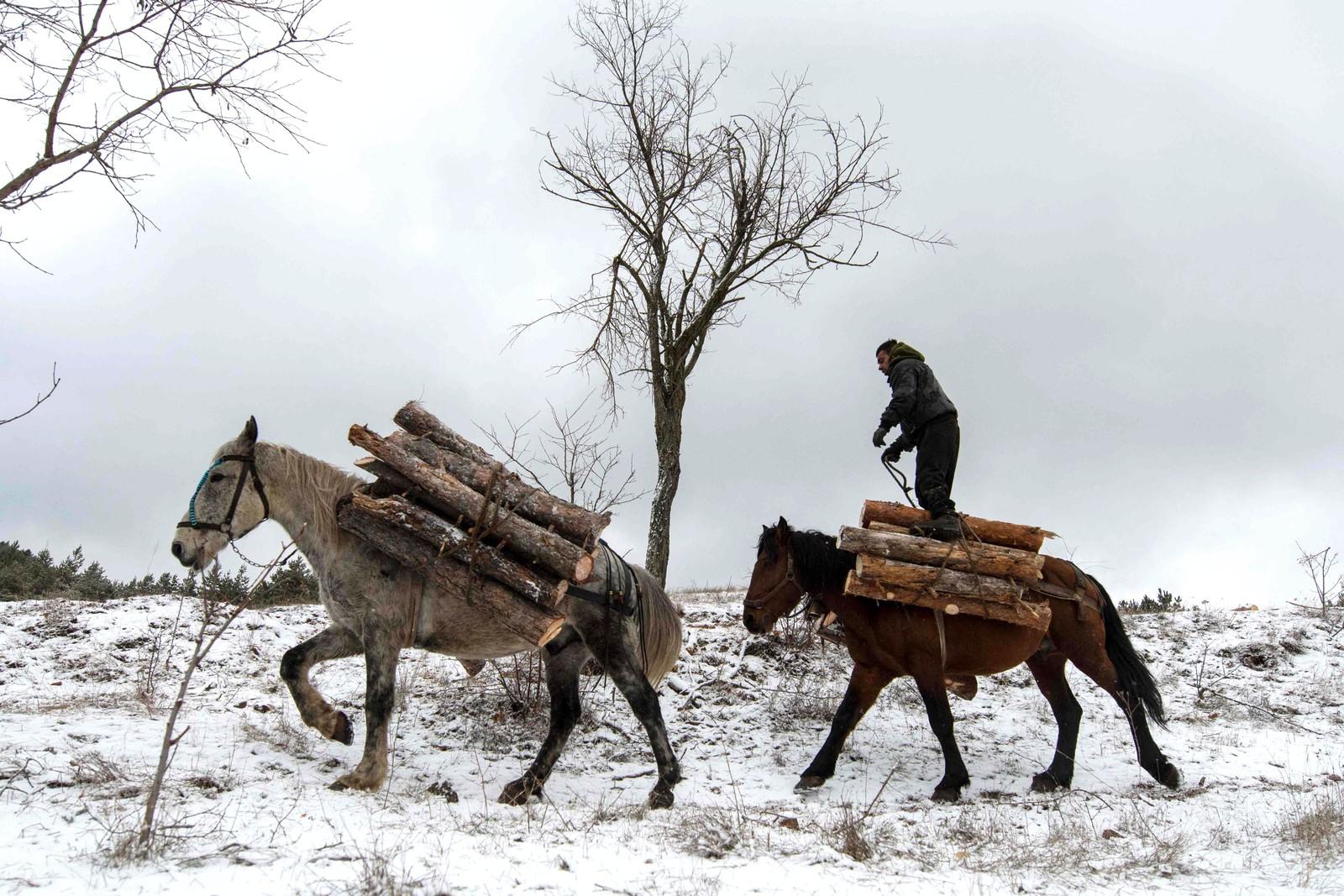 En tømmerhugger frakter tømmer nær Sofia i Bulgaria.