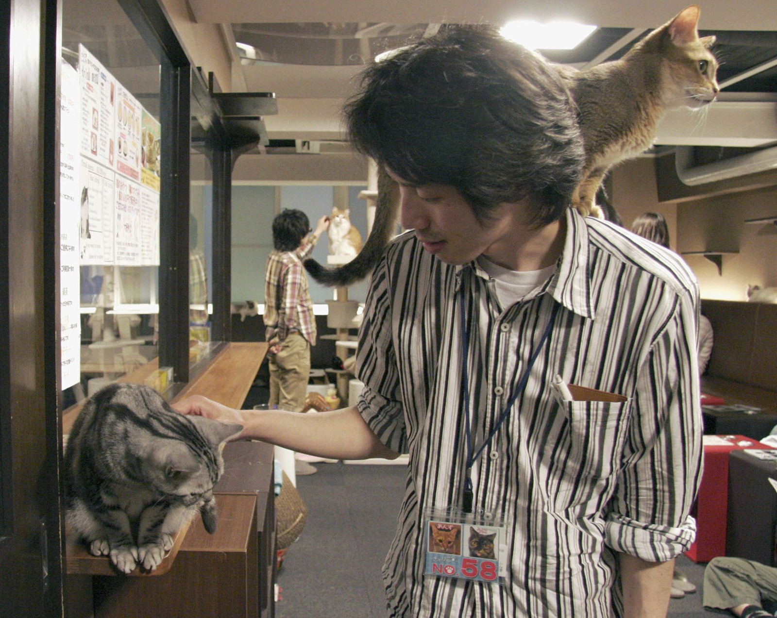 En mann klapper en katt ved kafe Calico i Tokyo. Bildet er fra 2012.