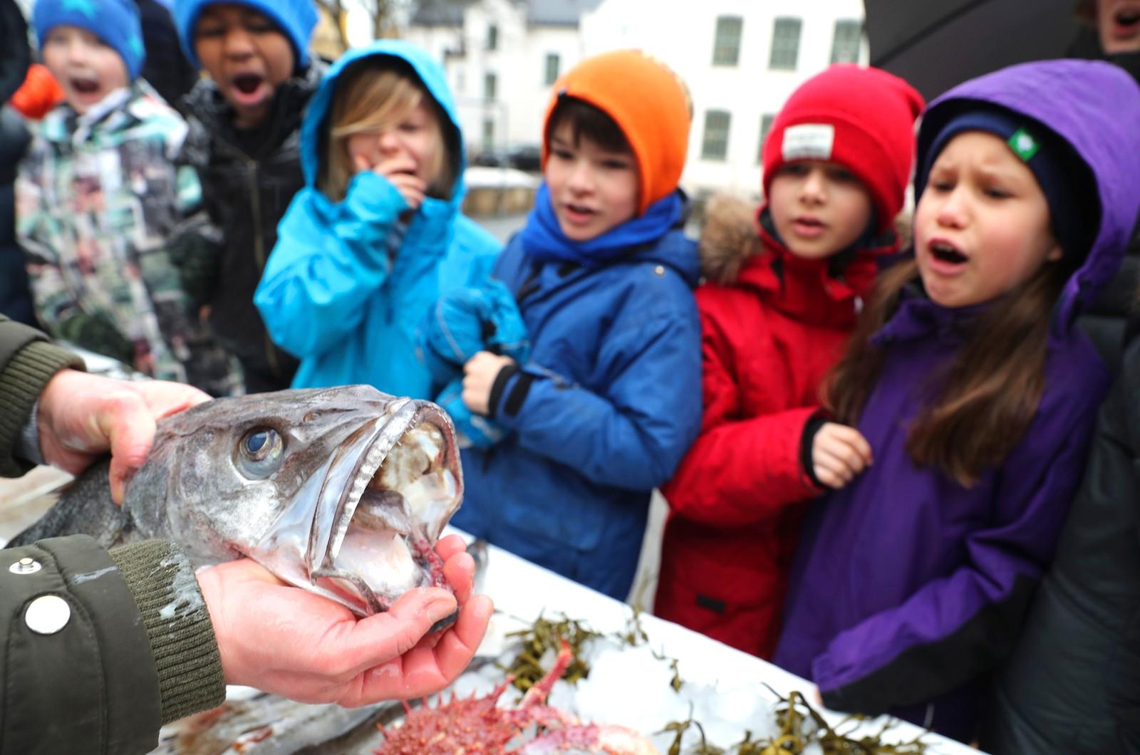 Skoleelever fra 4 klasse ved Gamlebyen skole synes munnen på fisken lysing er veldig skummel. Andreas Viestad fra Geitmyra matkultursenter for barn viser fram fisk i skolegården.