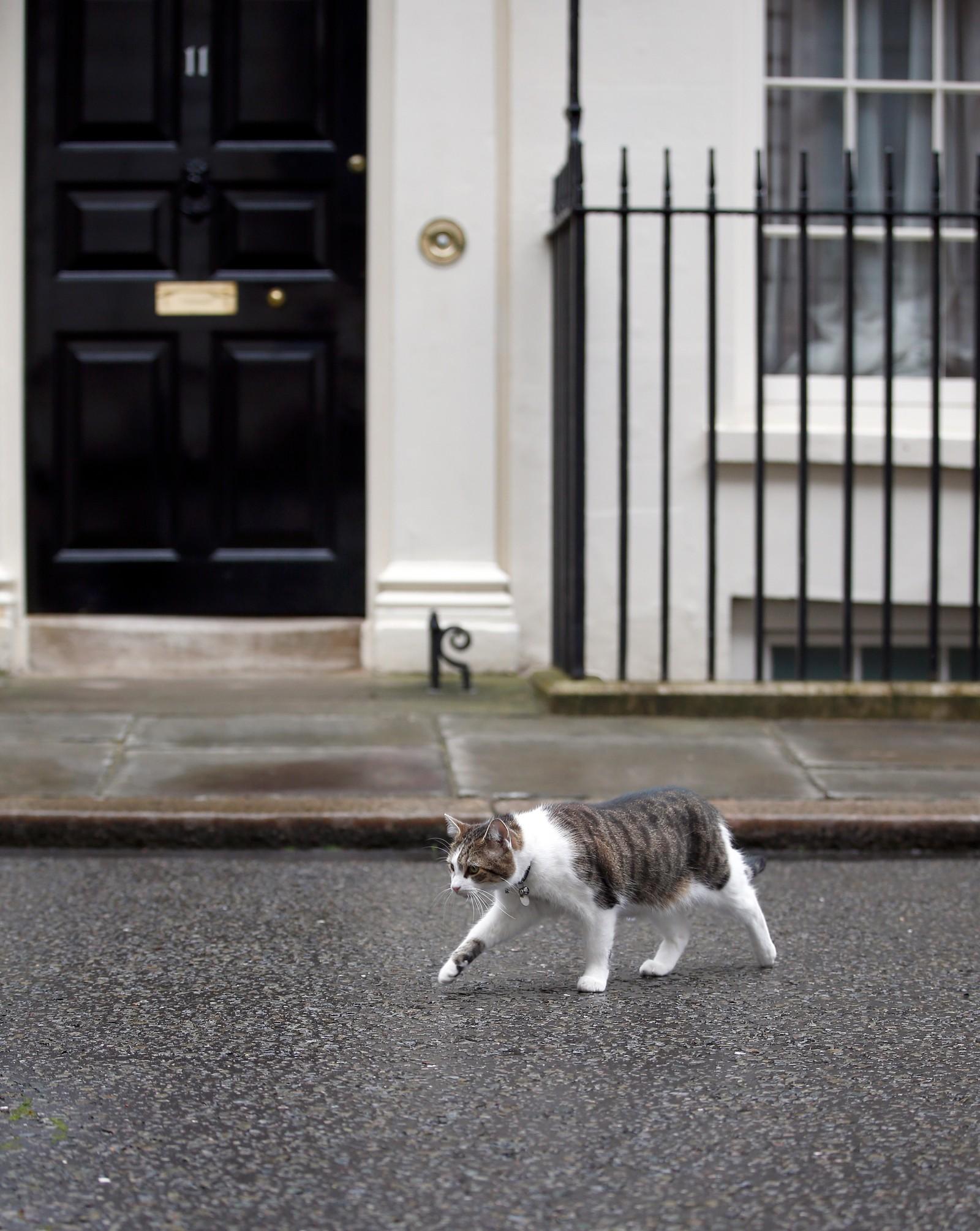 Larry, den britiske statsministerboligens huskatt, lar brexit være brexit og tar seg en gåtur i nabolaget.