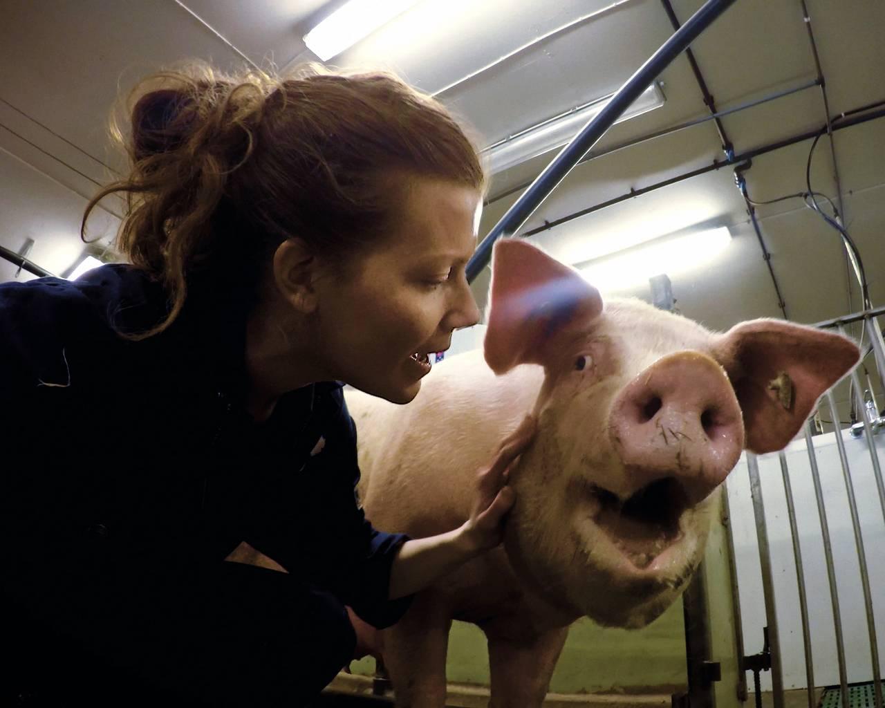Norun Haugen i grisefjøs